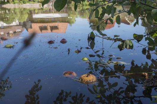 18-08-07-Zainthüttenteich-Verschmutzung-4